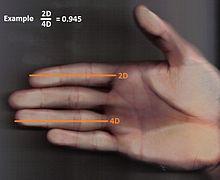 2d 3d measure